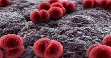 Caso di meningite a Bologna muore un bambino all'ospedale Maggiore