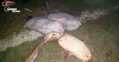 Malalbergo Bracconaggio ittico denunciati tre rumeni