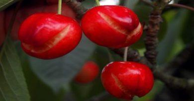 Maltempo, avremo meno frutta di stagione sulle nostre tavole