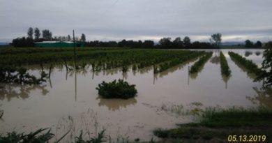 Maltempo,oltre 320mila euro di dannie raccolti minacciati