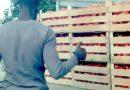Combattere il caporalato a ritmo di pomodori funky