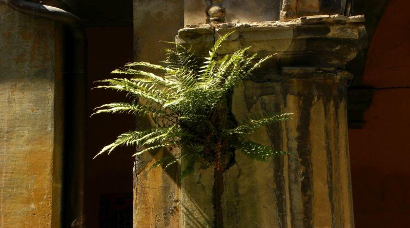 Fiori tra il cemento, come sono cambiate le piante che crescono nel centro di Bologna