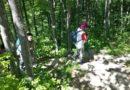 Foreste dell'Appennino bolognese da trasformare in bio-economia