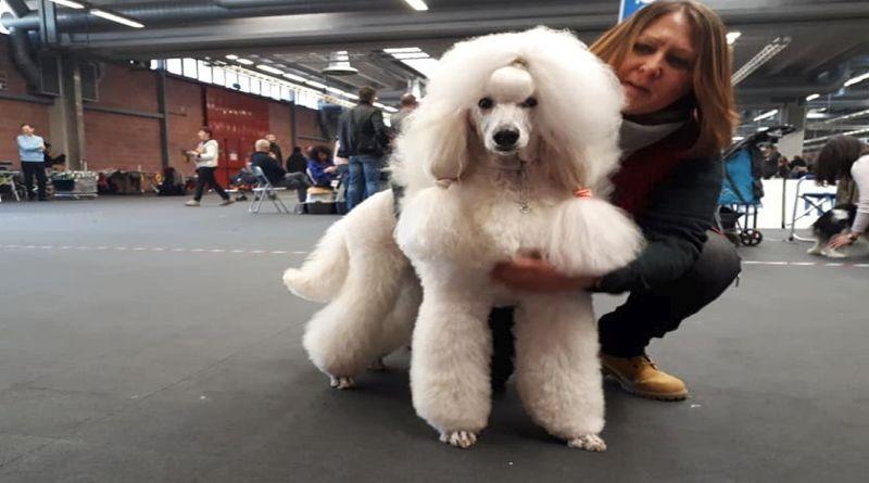 Caniinfesta sfilata cani cittadini a Bologna