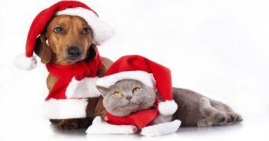 Regali di Natale artigianali per aiutare cuccioli di cane
