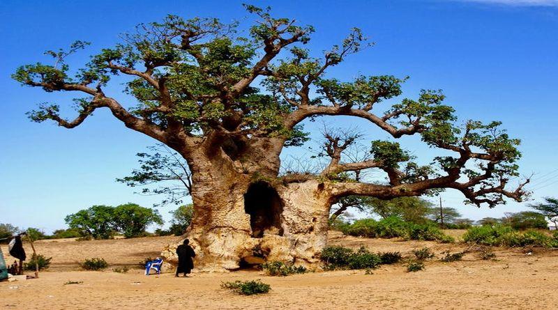 la festa degli alberi bologna natura ambiente