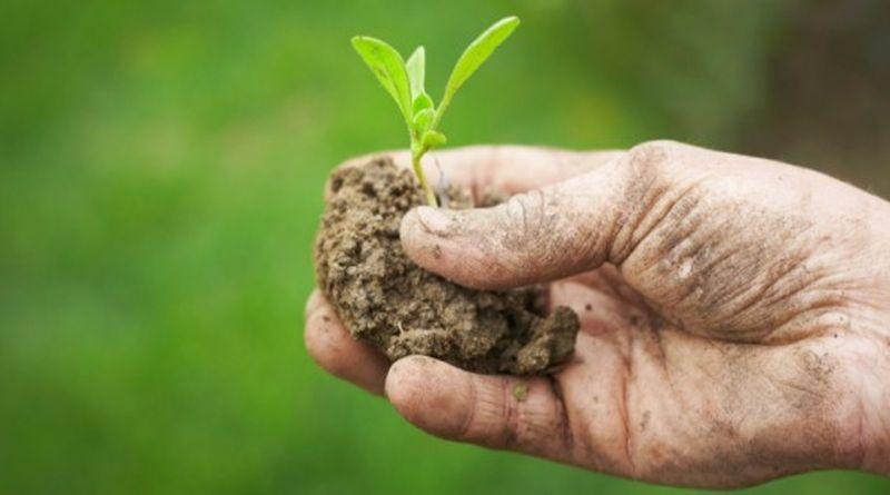«OrtoAmbiente», a Bologna un progetto innovativo per aiutare l'ambiente e l'agricoltura