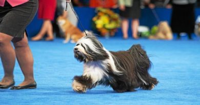 fiera canina modena
