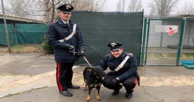Cani salvati Bologna