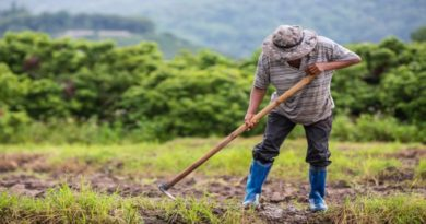 adotta un contadino bologna