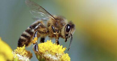 api università di bologna alma mater unibo