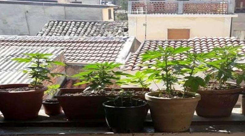 piantine marijuana bologna