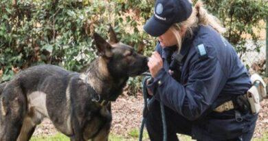 apache cane poliziotto trova 2 etti di marijuana nel parco della Montagnola a Bologna
