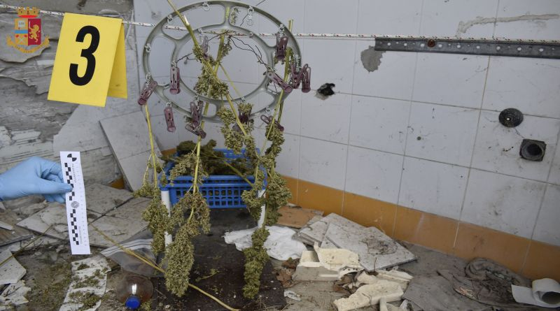 piantagione san lazzaro bologna marijuana