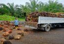 Olio di palma, ecco quali sono gli impianti scorretti in Emilia-Romagna secondo Legambiente