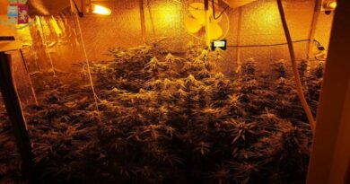 serra di marijuana piante bologna