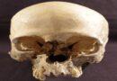 È di una donna di 5mila anni fa il cranio ritrovato nel Parco dei Gessi, la scoperta dell'Unibo