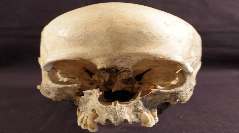 Il Cranio trovato nella Grotta Marcel Loubens uniba alma mater università di bologna