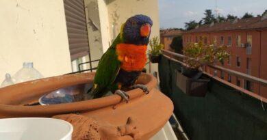 Naruto, il pappagallo fuggito ma ritrovato grazie alla solidarietà dei bolognesi sui social