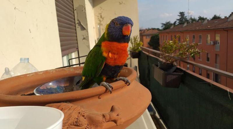 naruto pappagallo bologna social