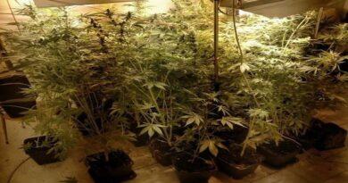 serra marijuana via dell'arcoveggio bologna gazzetta