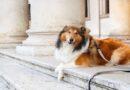 """A Bologna """"dog-sitter"""" accudiscono il cane mentre il padrone entra in un museo"""