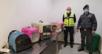 Importavano illegalmente a Bologna cuccioli di cani e gatti, denunciate 2 donne