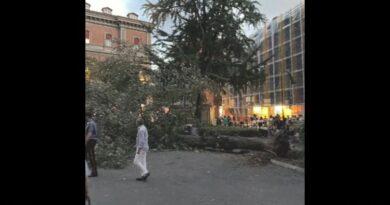 albero cade in piazza minghetti bologna