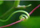 Nasce la molla biocompatibile stampata in 4D ispirata al mondo vegetale