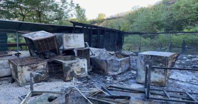 8 gatti morti carbonizzati per un incendio che ha devastatol'Oasi felina di Pianoro