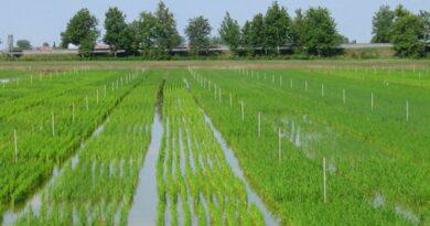 bologna budrio Le risaie di Altedo sono salve, vittoria degli ambientalisti contrari alla costruzione di un nuovo polo logistico